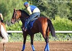 American Pharoah at Santa Anita on June 20.