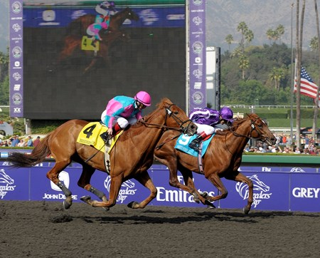 Man of Iron became Better Than Honour's fourth stakes winner in a row with a win in the 2009 Breeders' Cup Marathon.
