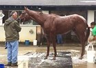 Belmont Stakes: The Truth or Else Gets A Bath