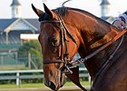 "American Pharoah<br><a target=""blank"" href=""http://photos.bloodhorse.com/AtTheRaces-1/At-the-Races-2015/i-zSgPCZt"">Order This Photo</a>"
