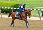 "American Pharoah at Belmont Park on June 5.<br><a target=""blank"" href=""http://photos.bloodhorse.com/TripleCrown/2015-Triple-Crown/Belmont-Stakes-147/i-Bm37GRz"">Order This Photo</a>"
