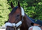 American Pharoah is bright-eyed June 7.