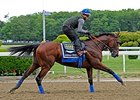"American Pharoah galloped at Belmont Park on Thursday.<br><a target=""blank"" href=""http://photos.bloodhorse.com/TripleCrown/2015-Triple-Crown/Belmont-Stakes-147/i-TsD6Qvv"">Order This Photo</a>"