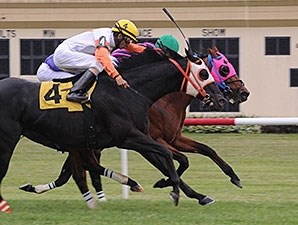 Amelia's Wild Ride (pink blinkers) gets his head in front of Ben's Cat at the finish.