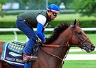 "American Pharoah<br><a target=""blank"" href=""http://photos.bloodhorse.com/TripleCrown/2015-Triple-Crown/Belmont-Stakes-147/i-cPtCq4h"">Order This Photo</a>"