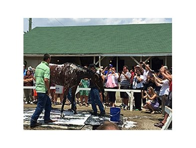 American Pharoah receives a bath after arriving at Churchill Downs June 7.