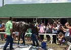 'Pharoah' Settles In Well at Churchill Downs