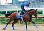 Zayat Stables Inks Promo Deal for 'Pharoah'