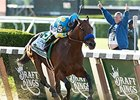 "Triple Crown winner American Pharoah<br><a target=""blank"" href=""http://photos.bloodhorse.com/TripleCrown/2015-Triple-Crown/Belmont-Stakes-147/i-NBSftgk"">Order This Photo</a>"