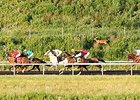 A deer running alongside horses during a race at Presque Isle Downs.