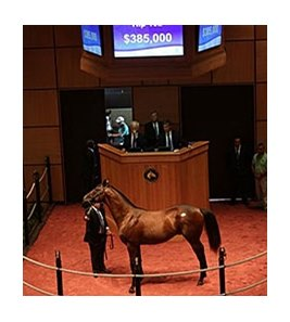 Hip 152, a colt by Scat Daddy sold for $385,000 at the Fasig-Tipton Kentucky July yearling sale.