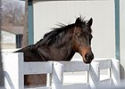 KY Horse Park Transitioning to Black Fences