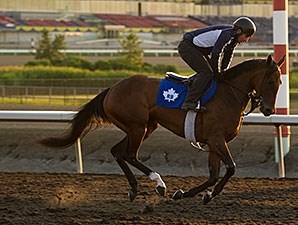Academic - Woodbine, July 3, 2015.