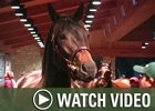 Video: Keeneland Nov - Week 1 Wrap