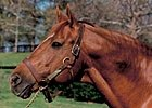 Slideshow: Secretariat Movie
