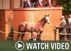 Video: Keeneland Nov - Final Wrap