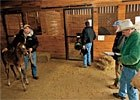 TradeZone: Hoof Care for Thoroughbreds