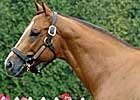 Sir Shackleton Sires First Winner