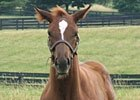 Guest Blog: A Nurse Mare Named Goldie