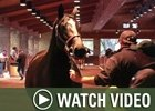 Video: Keeneland Nov - 11/12 Wrap