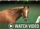 Video: Breeders' Cup Saturday Recap