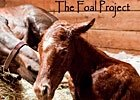 The Foal Project Comes to Lexington