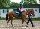 California Chrome to Return to Racing in 2016
