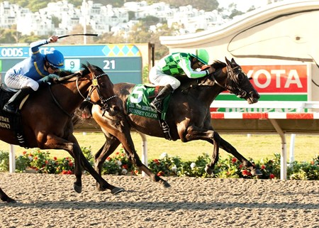Odds-on favorite Sunset Glow bulled her way between horses at the top of the stretch to get the lead and repelled the determined rally of Her Emmynency to capture the $300,000 Del Mar Debutante (gr. I) by a neck August 30, 2014.