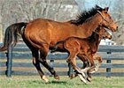 2011 Thoroughbred Live Foal Report