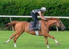 Wise Dan on Target for September Return