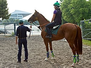California Chrome - Arlington Park, July 11, 2015.