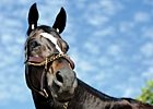 Slideshow: A Day With Zenyatta