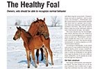Trade Zone: The Healthy Foal