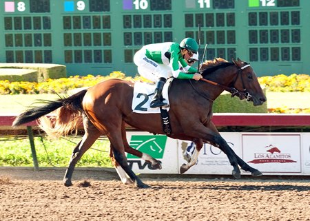 Swipe's lone win came in Summer Juvenile Stakes at Los Alamitos