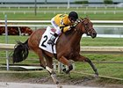 Dancie