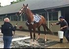 Belmont Stakes: Frammento Gets a Bath