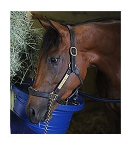 "Lady Eli<br><a target=""blank"" href=""http://photos.bloodhorse.com/AtTheRaces-1/At-the-Races-2015/i-RgSdfQ2"">Order This Photo</a>"