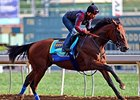 American Pharoah works at Santa Anita June 29.