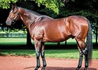 Tapizar led all first crop stallions by average, two or more sold, with five purchased at an average price of $168,000.