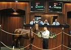 OBS Yearling Sale Stays Steady on Final Day