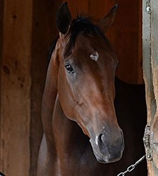Rachel's Valentina makes her debut Aug. 2