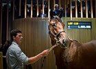 Record-Breaking Arqana Sale Concludes