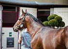 Dubawi Colt Brings Arqana August Record Price