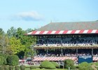 A crowd fills Saratoga for American Pharoah's work Aug 28.
