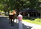 Fasig-Tipton Saratoga Tuesday Hips to Watch