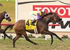 D'Amato Turf Workers Breeze Easy for BC