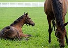 Increase Projected for 2016 Foal Crop