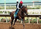 American Pharoah works at Del Mar August 23, 2015.
