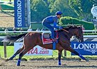 "American Pharoah gallops at Saratoga on August 28, 2015.<br><a target=""blank"" href=""http://photos.bloodhorse.com/AtTheRaces-1/At-the-Races-2015/i-6k2xRmp"">Order This Photo</a>"