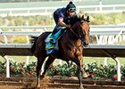 American Pharoah works at Del Mar August 15.